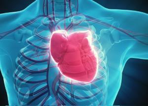 Exercício aeróbio e o coração!