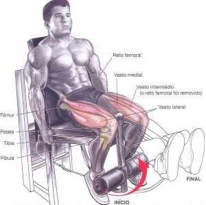 Cadeira Extensora Exemplo de Treino de Pernas Completo para Iniciantes