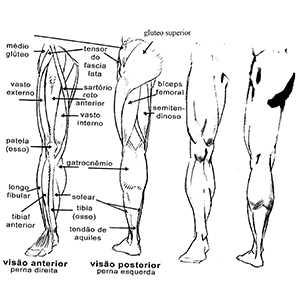 Exemplo de Treino de Pernas Completo para Iniciantes