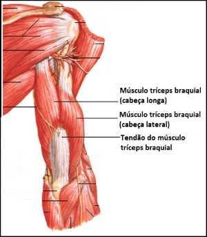 Exemplo de Treino de Tríceps para Iniciantes