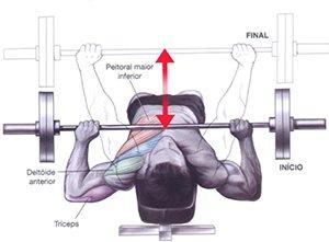 Supino reto com halter ou barra Exemplo de Treino de Peito para Iniciantes